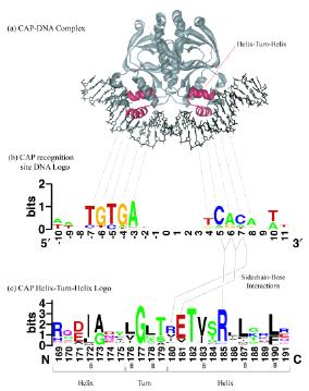 技能提升篇——氨基酸序列保守性分析之weblogo应用